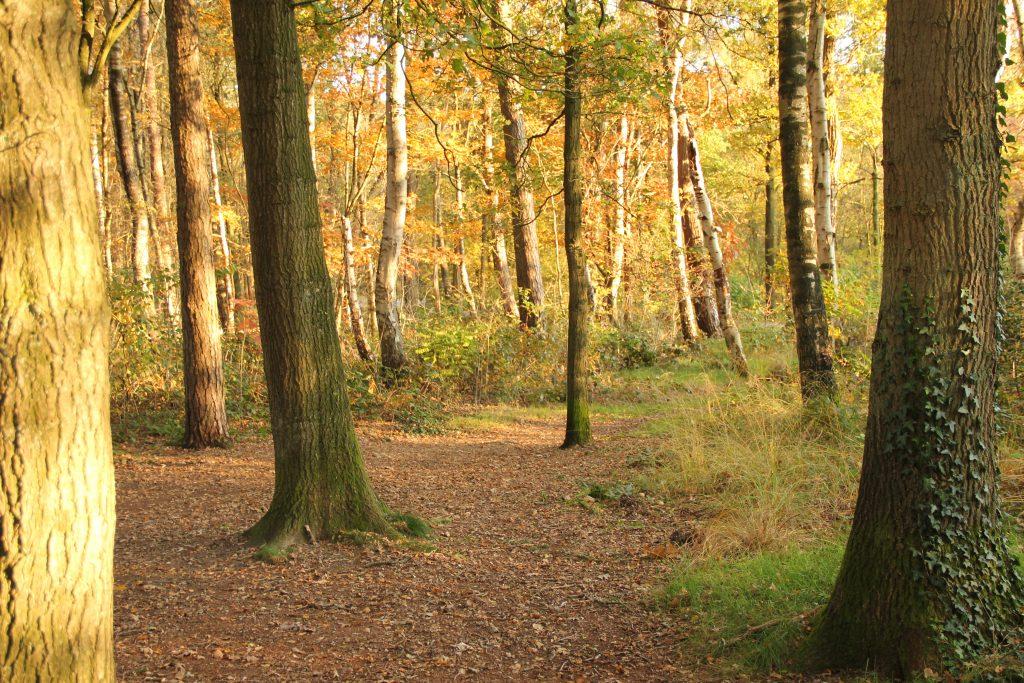 Tekstschrijver_worden_Apeldoorn_bomen_bos_zien